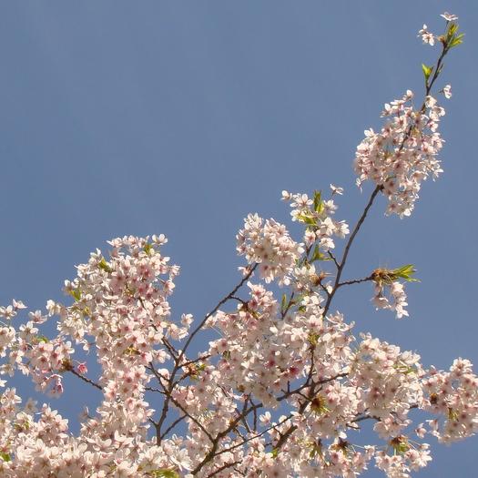 Spring: 23 April 2013