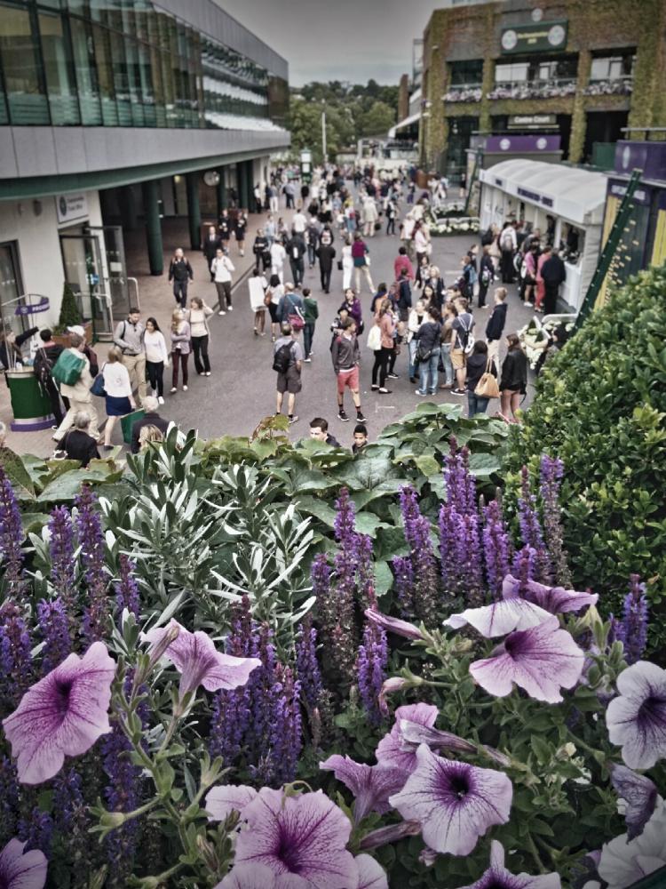 Wimbledon 2015: dark green and purple