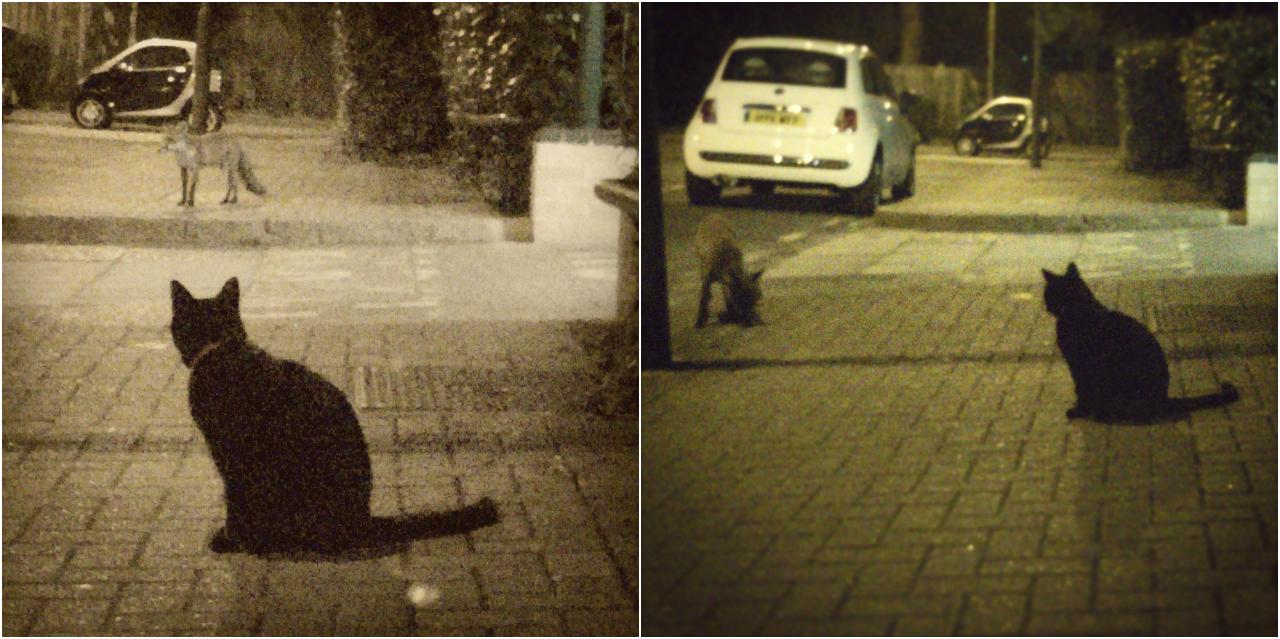 黒猫と子狐