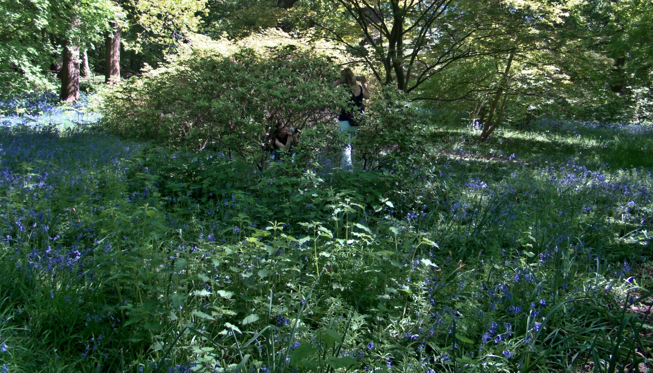 Two people trampling on the bluebells in the Isabella Plantation, Richmond Park, London.