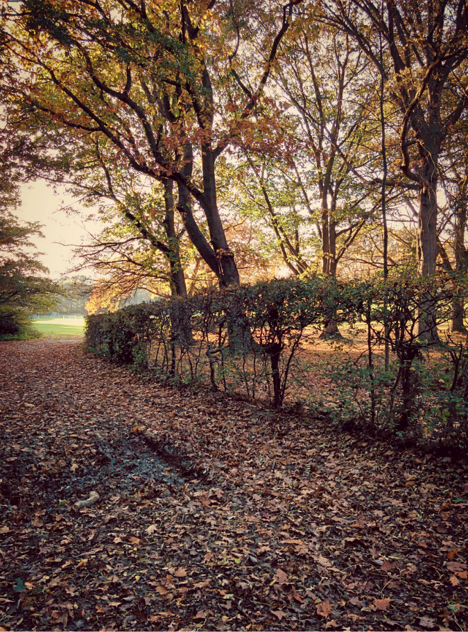 An autumnal scene: edited