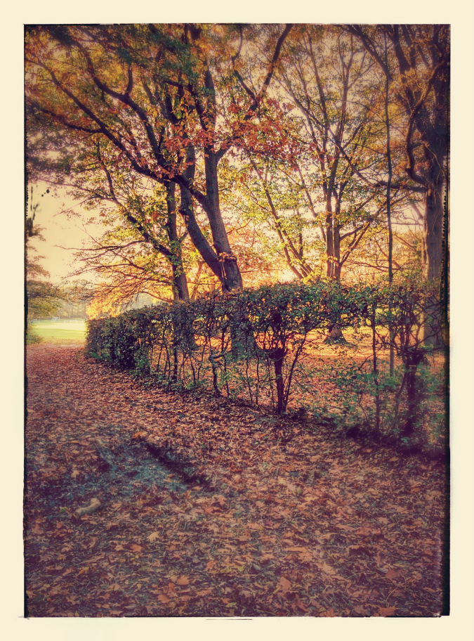 An autumnal scene: Google auto-awesome