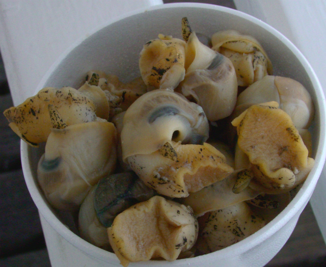 英国・ブライトンで食べたツブの写真(2012年5月24日)