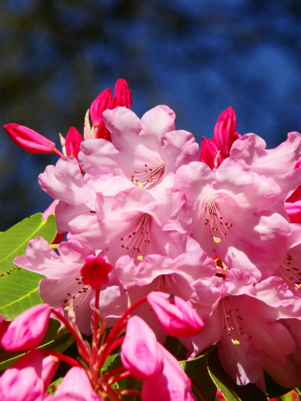Richmond Park: photographs of flowers in the Isabella Plantation (2014)