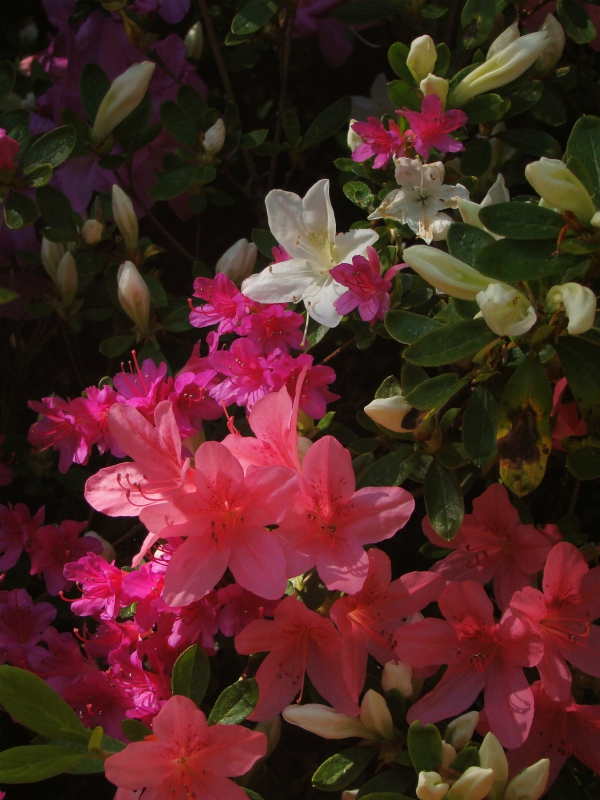 リッチモンド・パークで撮影した花の写真(2018年)