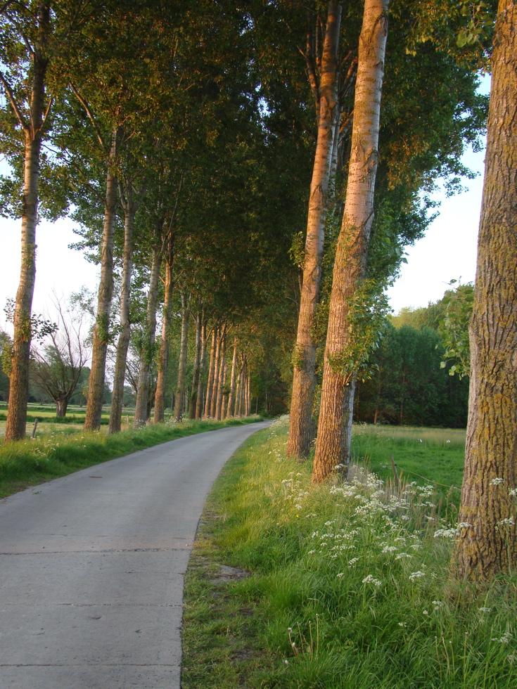 Photograph—Belgium—Country road