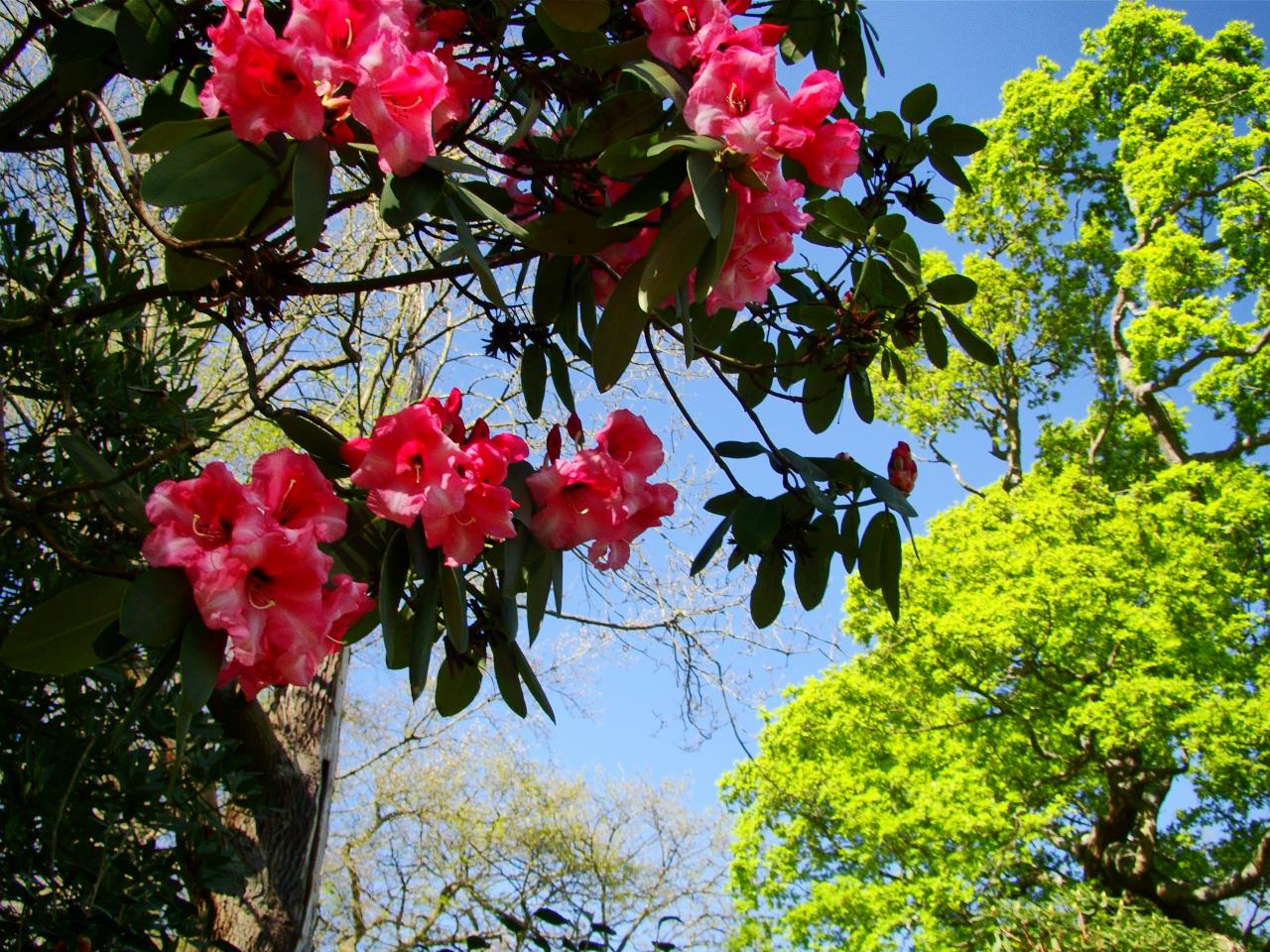 Isabella Plantation, Richmond Park (13 April 2014—11)