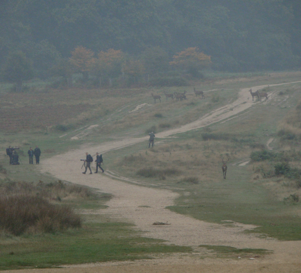 Red deer and photographers in Richmond Park, London, 3 October 2015