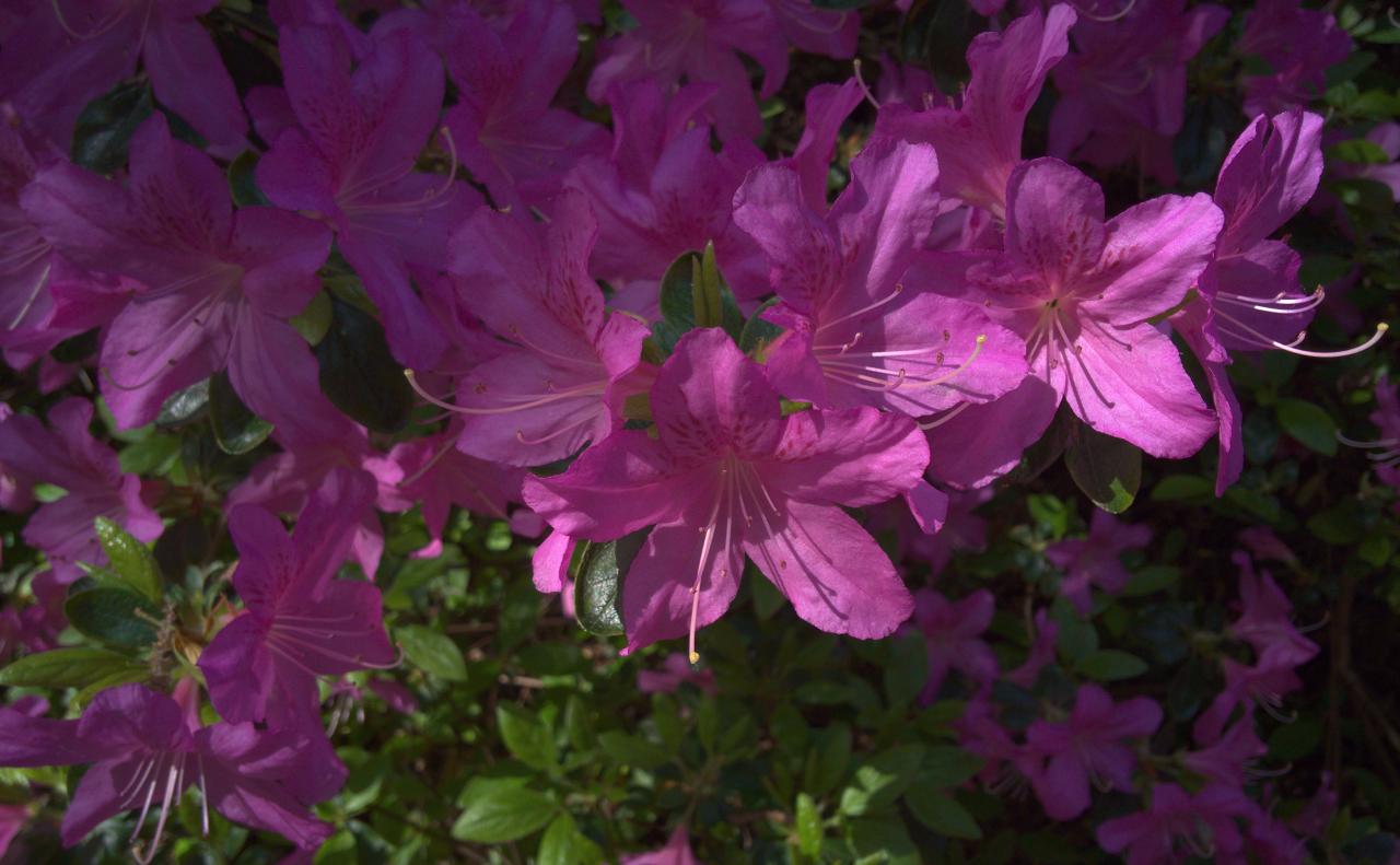 花|ロンドンのリッチモンド・パークにて|2016年5月13日撮影