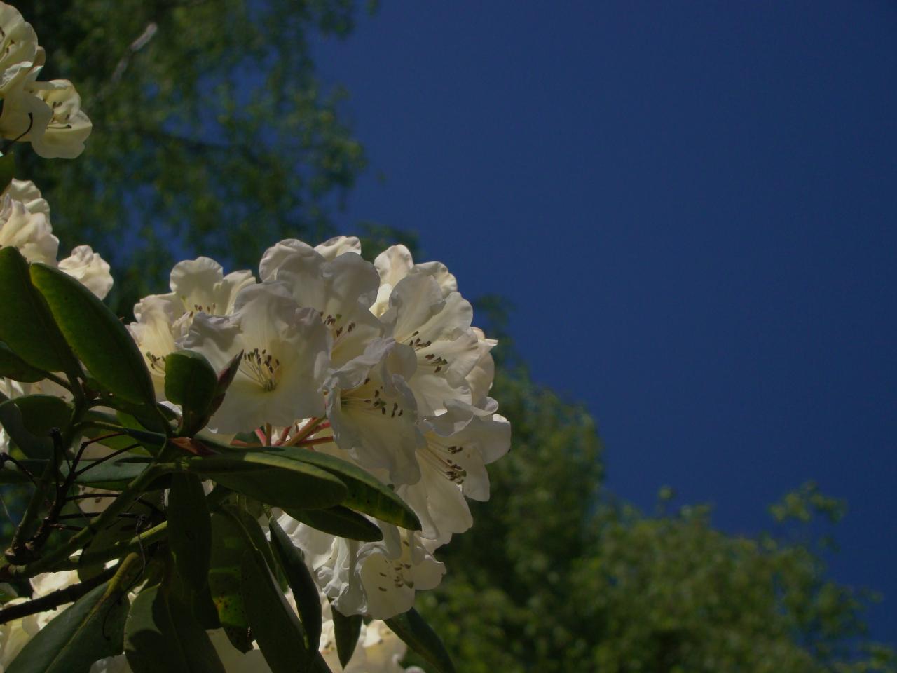 Flowers in Richmond Park, London