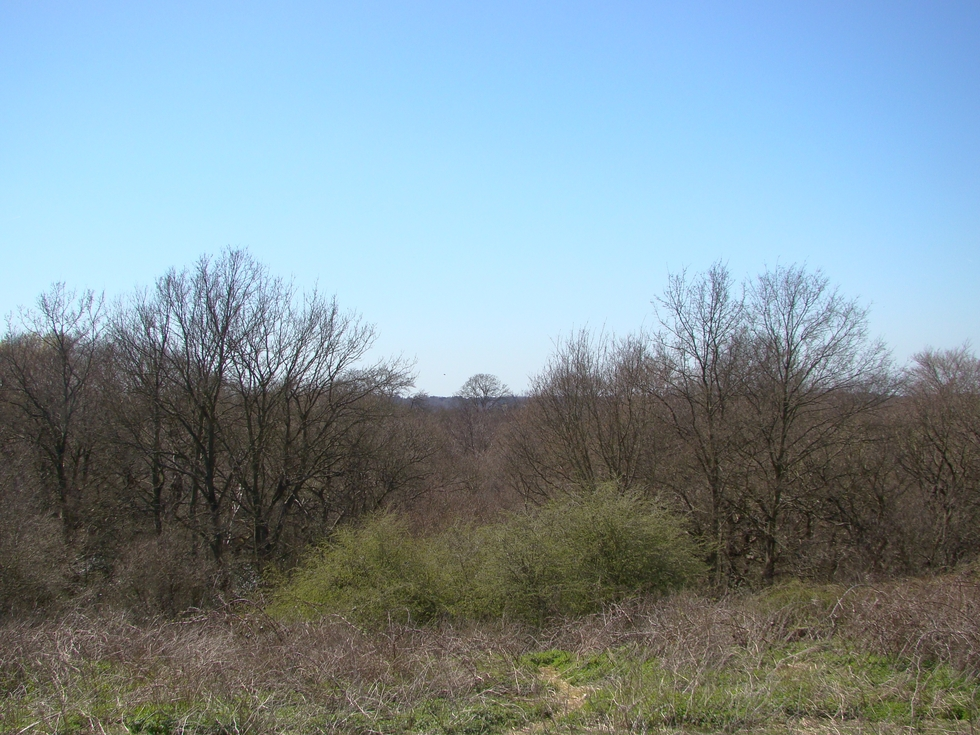 Wimbledon Common (20 April 2013 — 7)