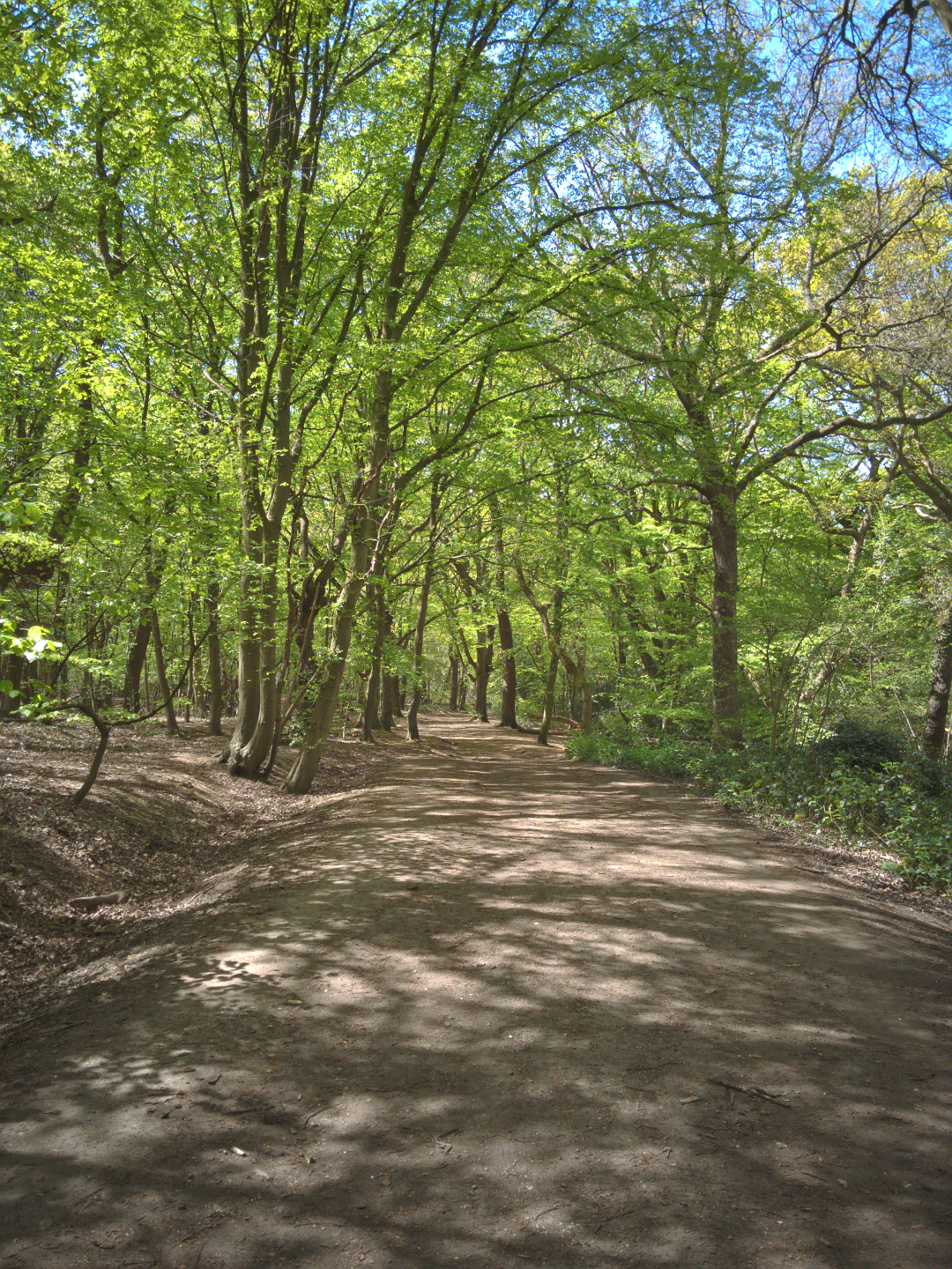 Wimbledon Common (4 May 2016)