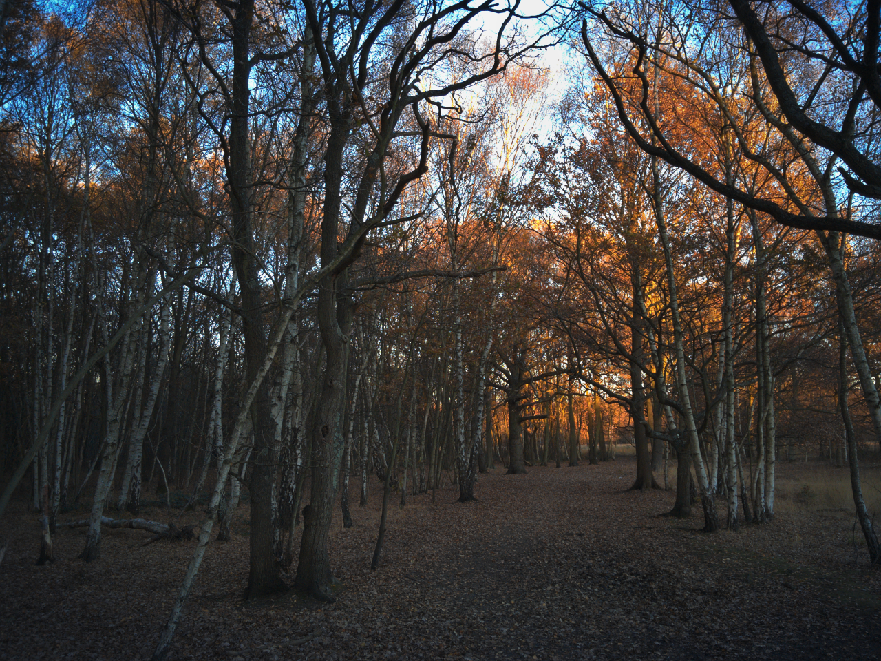 Wimbledon Common (29 November 2016)