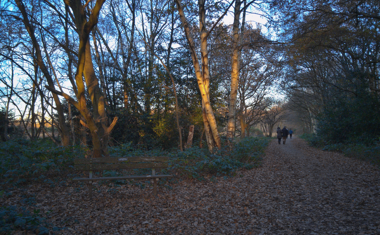 Wimbledon Common (4 December 2016)