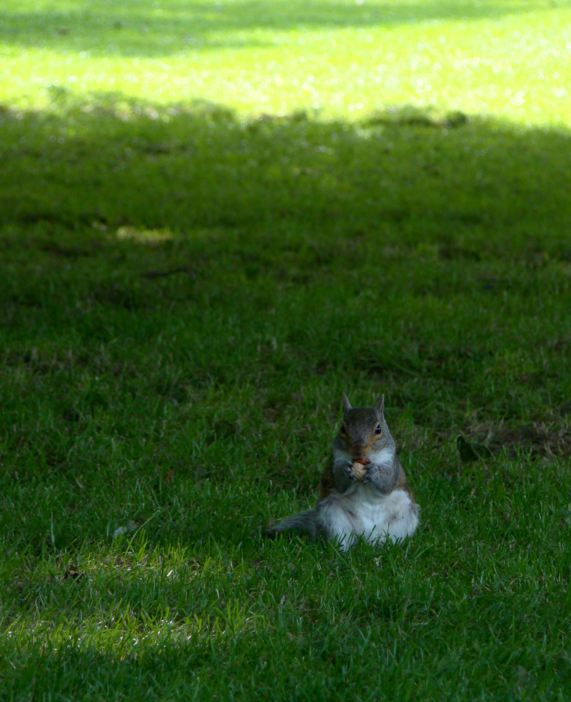 Photograph of a squirrel