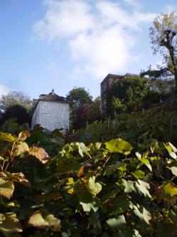 Clos Montmartre, a vineyard in central Paris