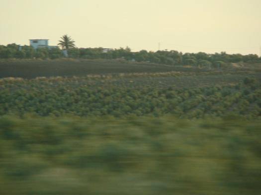 コルドバ・マラガ:高速列車での旅 過ぎ去る風景【2】