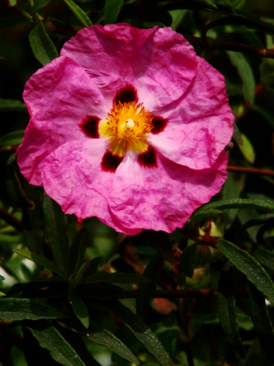 Snapshots—Flowers—151