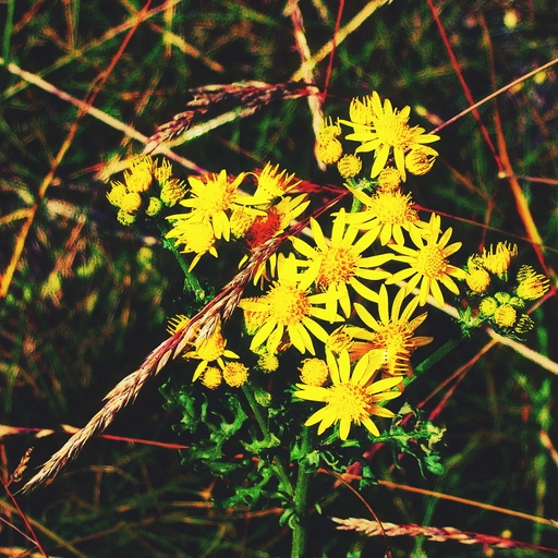 Stock images—512×512—Flowers