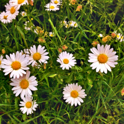 Stock images — 512 × 512 — Flowers — Ox-eye daisy (Leucanthemum vulgare), Wimbledon Common, London, 7 June 2018.