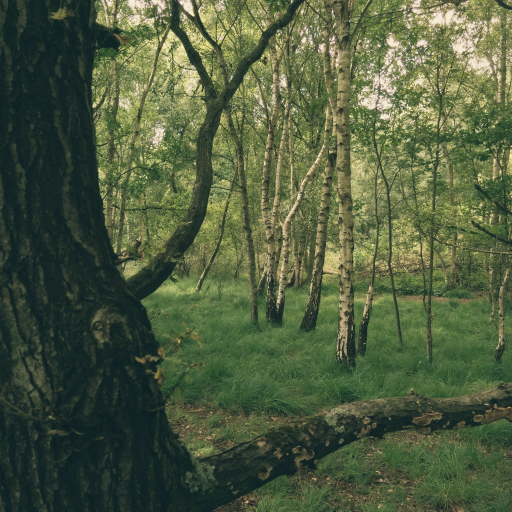 Stock images—512×512—Trees