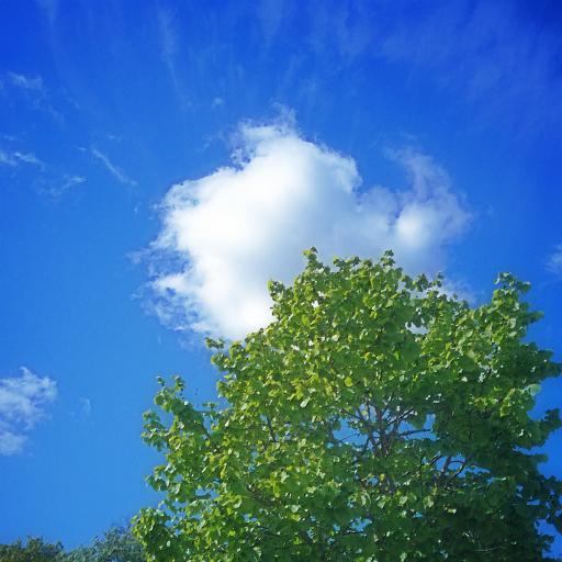 画像素材512✕512:木の写真(60)