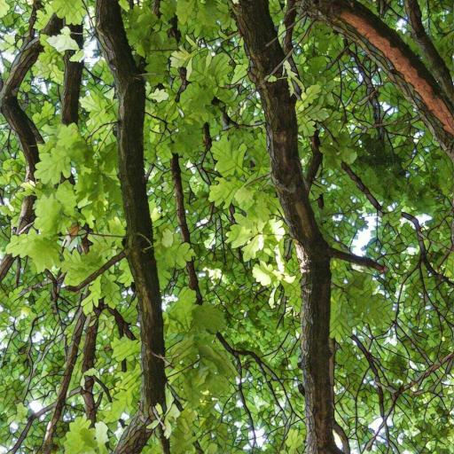 画像素材512✕512:木の写真(71:ウィンブルドン・コモンで撮影した楢の木)