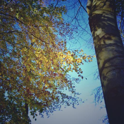 画像素材512✕512:木の写真(83:スコットランド・ダルキースにあるフォート・ダグラス公園で撮影した木の写真)