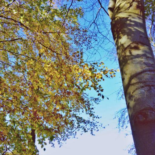 画像素材512✕512:木の写真(84:スコットランド・ダルキースにあるフォート・ダグラス公園で撮影した木の写真)