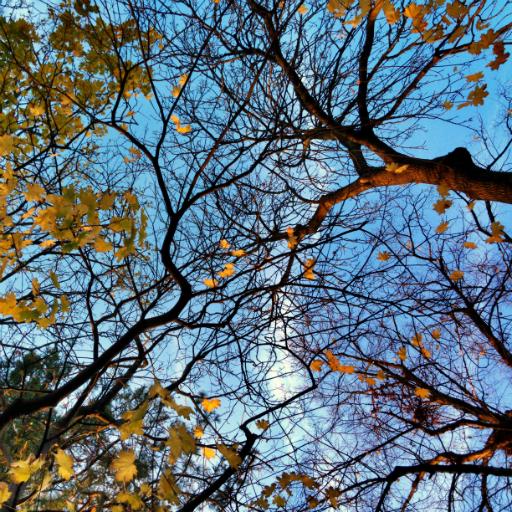 画像素材512✕512:木の写真(86:ロンドンの家近くで撮影した木の写真)