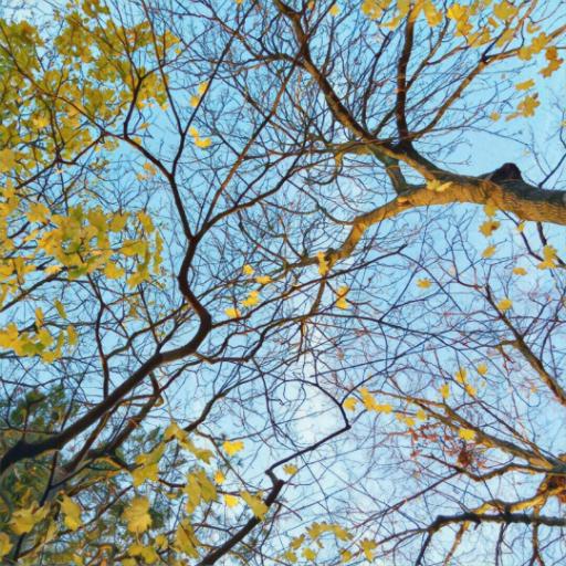 画像素材512✕512:木の写真(87:ロンドンの家近くで撮影した木の写真)