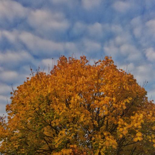 画像素材512✕512:木の写真・画像