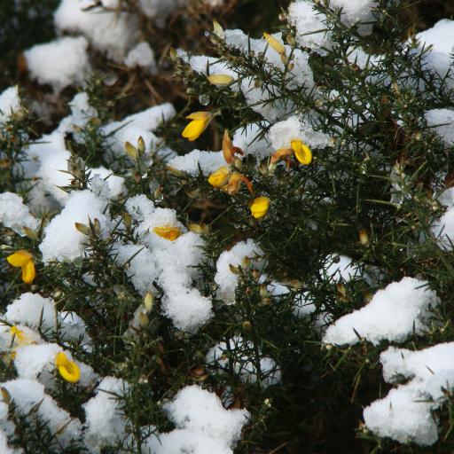 画像素材512✕512:冬の景色の写真・画像