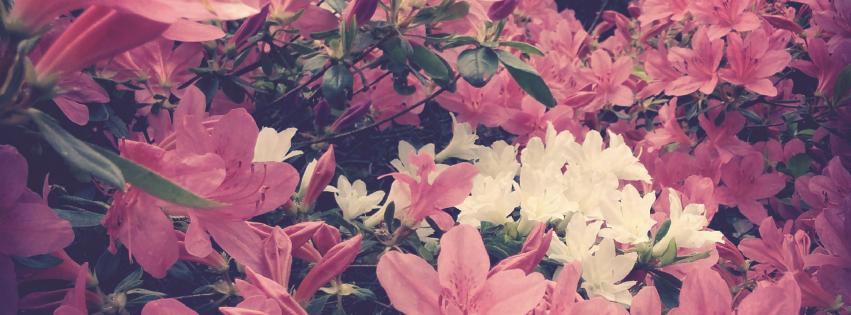 画像素材|851✕315(Facebookカバー写真)|花の写真|422|躑躅