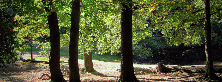 Stock images — Facebook cover photo (851 × 315) — Trees — Wimbledon Common, 5 October 2014