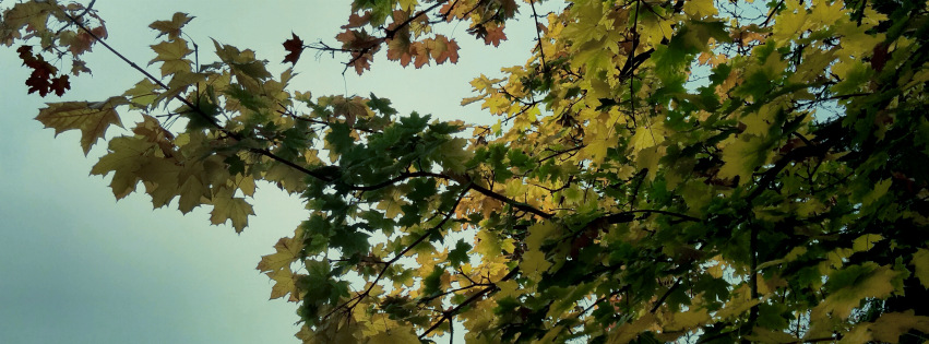 Stock images—Facebook cover photo (851×315)—Trees—1 November 2015