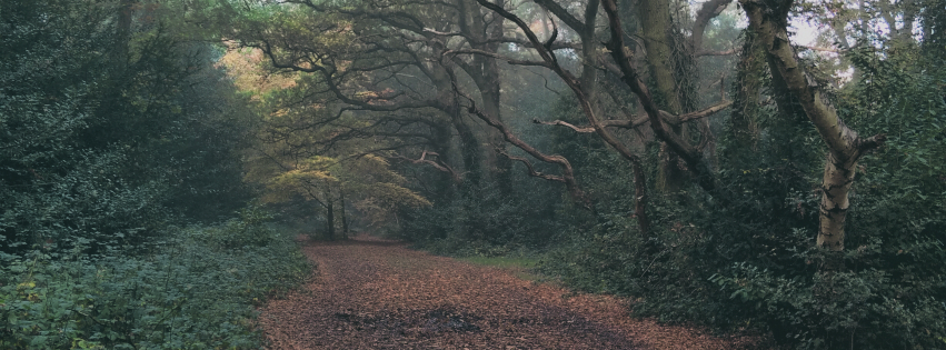 Stock images — Facebook cover photo (851 × 315) — Trees — Wimbledon Common — 1 November 2015