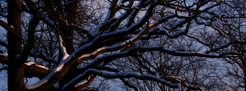 Winter Scene Cover Photos For Facebook Facebook Cover Photo Winter