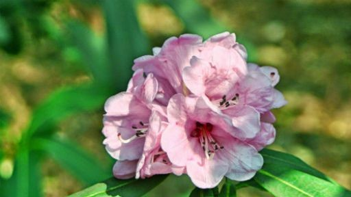 Flowers: 45