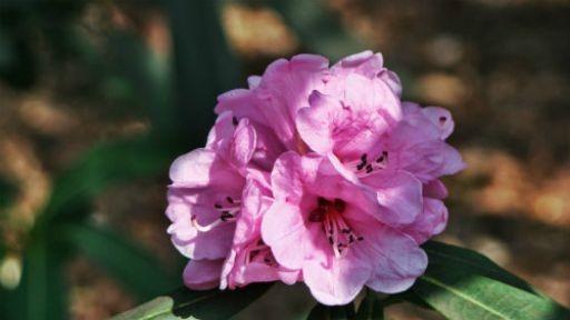 Flowers: 46