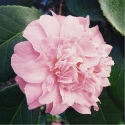 (Thumbnail) Thumbnail—Stock images 512×512: flowers—273