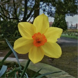 画像素材512✕512|花|282