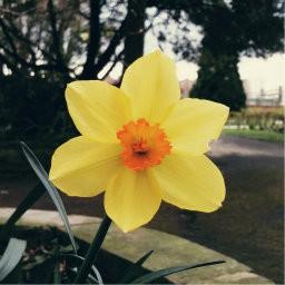 画像素材512✕512|花|284
