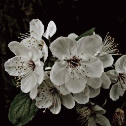 画像素材512✕512|花|291