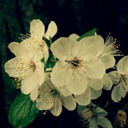 画像素材512✕512|花|292