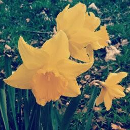 画像素材512✕512|花|299