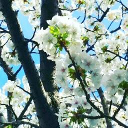 画像素材512✕512|花|301