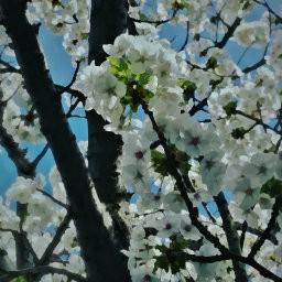 画像素材512✕512|花|304