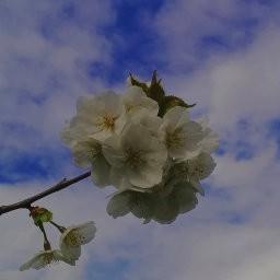 画像素材512✕512|花|308