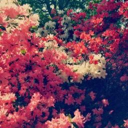 画像素材512✕512|花|361